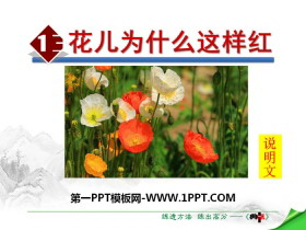 《花儿为什么这样红》PPT