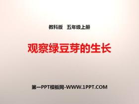 《观察绿豆芽的生长》生物与环境PPT下载