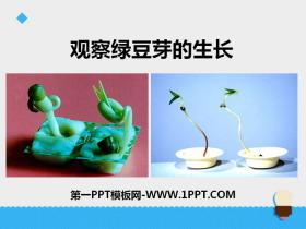 《观察绿豆芽的生长》生物与环境PPT教学课件