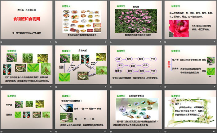 《食物链和食物网》生物与环境PPT