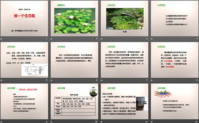 《做一个生态瓶》生物与环境PPT