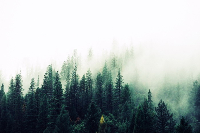雾气笼罩的森林PPT背景图片