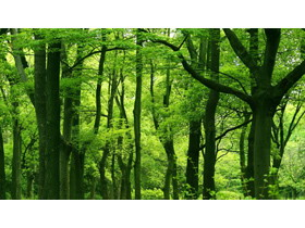 三���G色森林PPT背景�D片