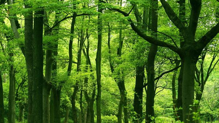 三张绿色森林PPT背景图片