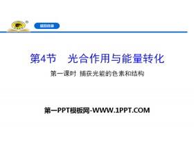 《光合作用�c能量�D化》�胞的能量供��和利用PPT