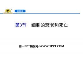 《�胞的衰老和死亡》�胞的生命�v程PPT