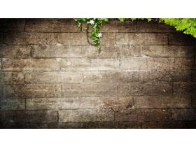 砖墙与绿叶PPT背景图片