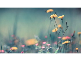 七��唯美植物花朵PPT背景�D片