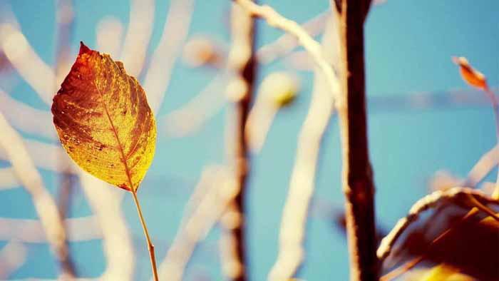 一组唯美小清新植物PPT背景图片
