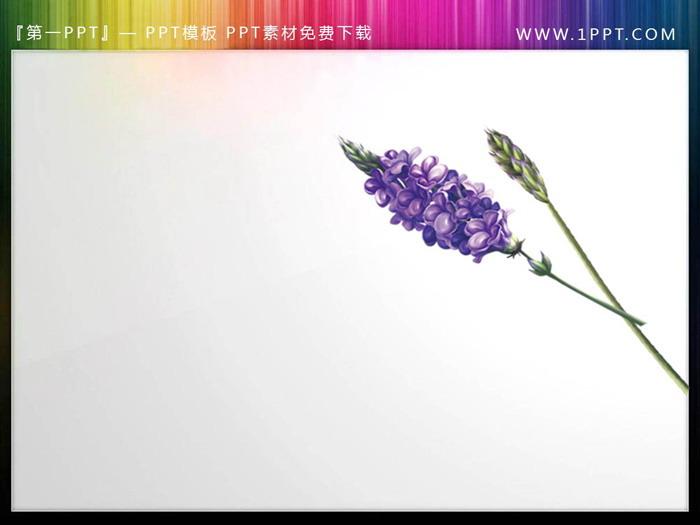一�M唯美透明植物PPT素材