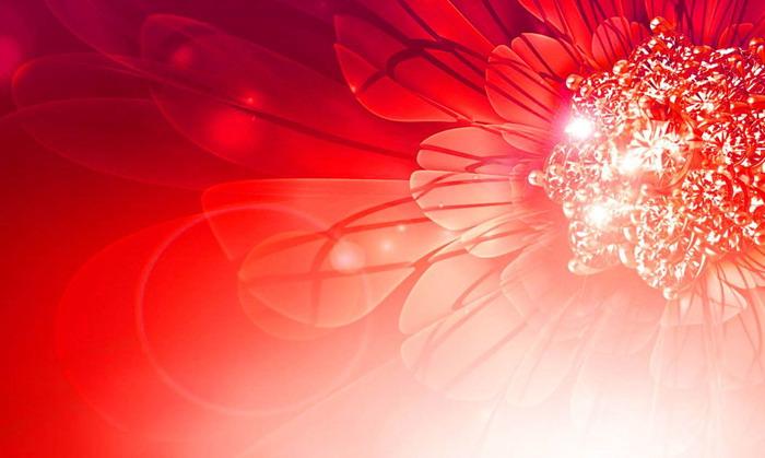 七张唯美植物花朵ppt背景图片