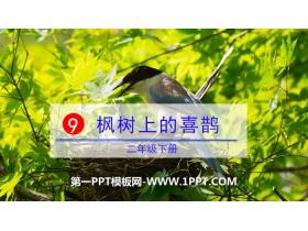 《枫树上的喜鹊》PPT课件