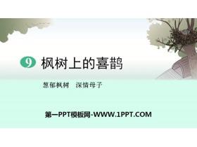 《枫树上的喜鹊》PPT下载