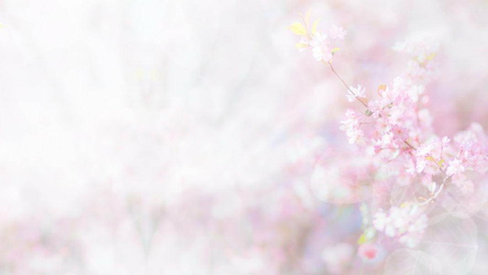 �G色清新植物�~子花卉PPT背景�D片