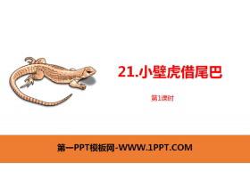 《小壁虎借尾巴》PPT�n件(第1�n�r)