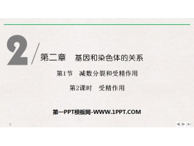 《�p�捣至押褪芫�作用》基因和染色�w的�P系PPT�n件(第2�n�r受精作用)