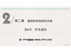 《伴性�z�鳌坊�因和染色�w的�P系PPT�n件