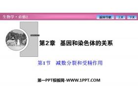 《�p�捣至押褪芫�作用》基因和染色�w的�P系PPT下�d