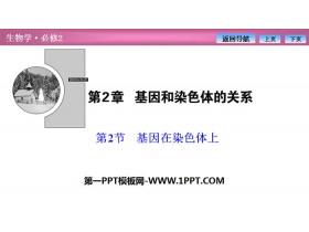 《基因在染色�w上》基因和染色�w的�P系PPT下�d