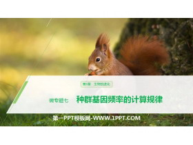 《种群基因频率的计算规律》生物的进化PPT