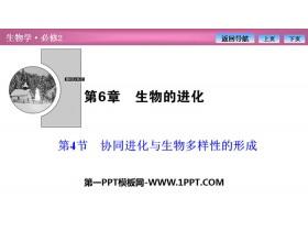 《协同进化与生物多样性的形成》生物的进化PPT下载