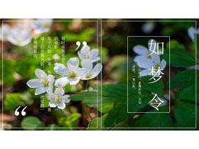 清新�G色植物�D片排版�s�I�LPPT模板