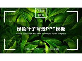 精致绿色叶子PPT模板免费下载