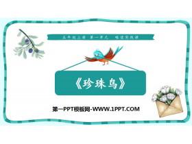 《珍珠鸟》PPT优质课件