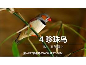 《珍珠鸟》PPT优秀课件下载