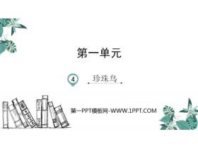 《珍珠鸟》PPT优质课件下载