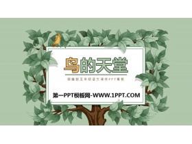 《鸟的天堂》PPT课件下载