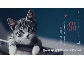 《猫》PPT优秀课件