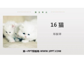 《猫》PPT优质课件