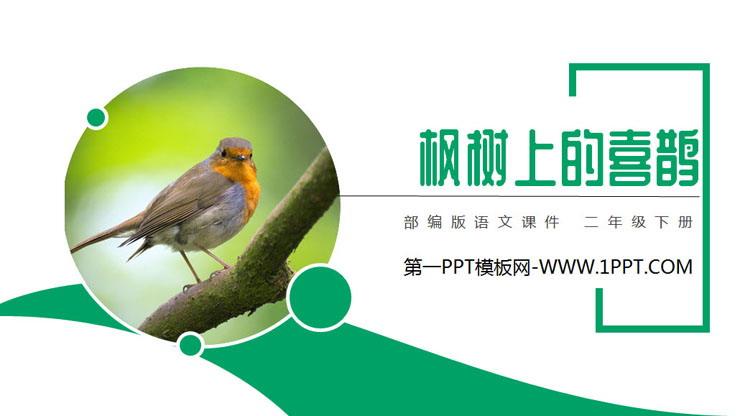 《枫树上的喜鹊》PPT课件免费下载