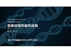 《腔肠动物和扁形动物》PPT精品课件