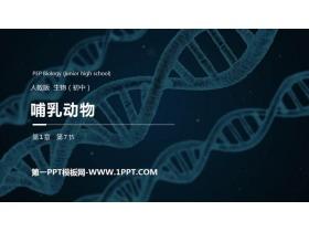 《哺乳�游铩�PPT精品�n件