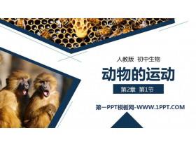 《动物的运动》PPT精品课件