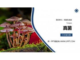 《真菌》PPT精品�n件