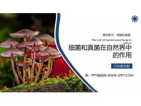《�菌�e和真菌在自然界中的作用》PPT精品�n件