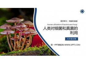 《人����菌和真菌的利用》PPT精品�n件