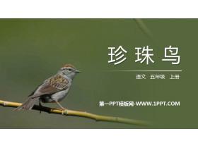 《珍珠鸟》PPT免费课件下载