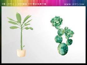 绿色水彩盆景与仙人掌免费AV手机在线观看片