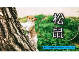 《松鼠》PPT优质课件下载