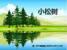 《小松树》PPT教学课件