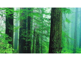 5���G色森林PPT背景�D片