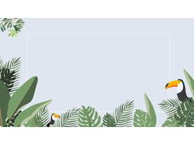 四张卡通大嘴鸟阔叶植物叶子PPT背景图片