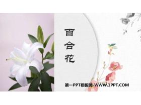 《百合花》PPT精品�n件
