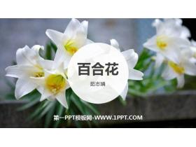《百合花》PPT��秀�n件