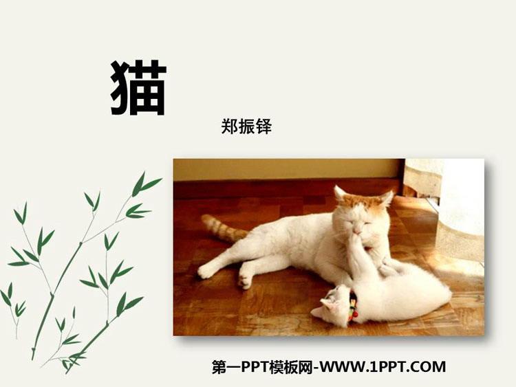 《猫》PPT免费课件下载