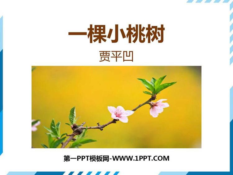 《一棵小桃树》PPT课文课件